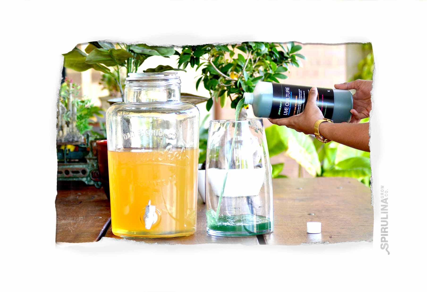 Setup tank o grow spirulina