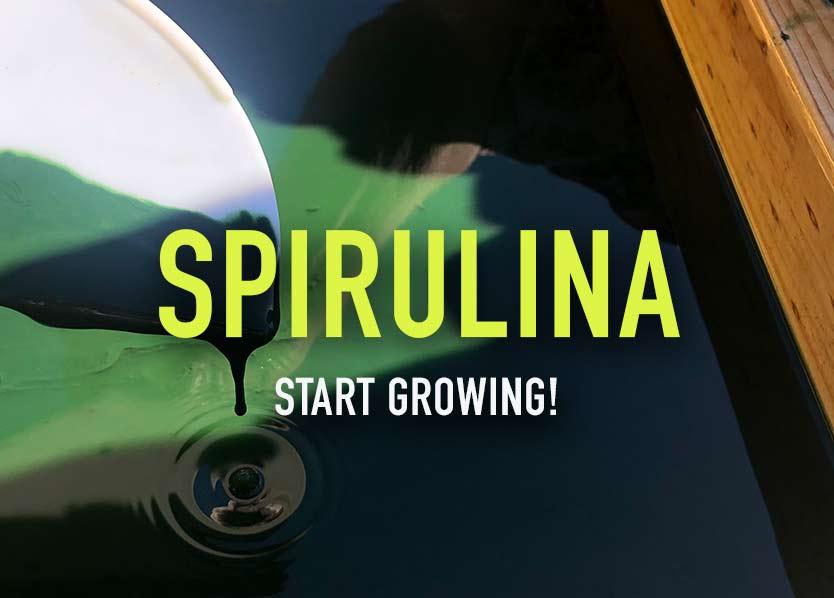Spirulina - grow at home